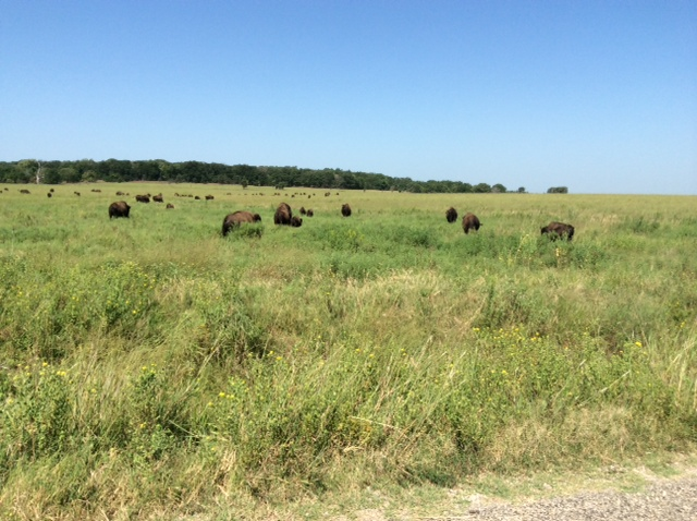 Tall Grass Prarie in the Pawhuska area, where the Buffalo roam.